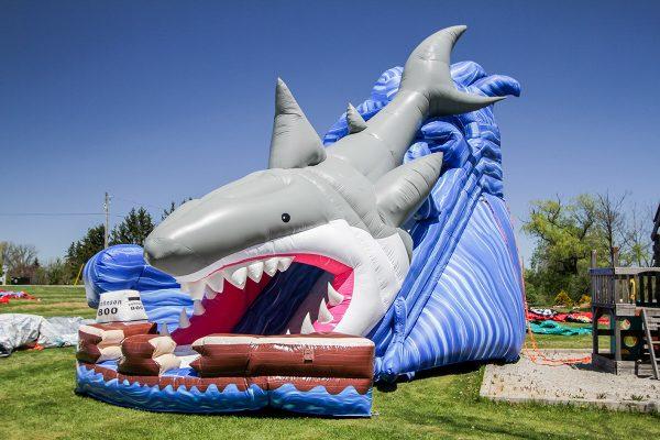 shark-slide